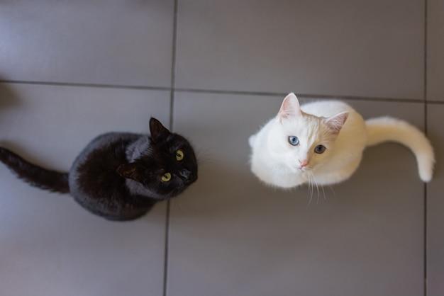 Gatto bianco e nero sdraiato su un pavimento di cemento