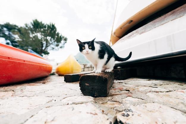 Gatto bianco e nero seduto su una tavola di legno alla stazione dei battelli