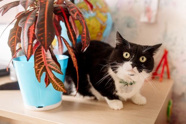 Gatto bianco e nero con stupore guarda la telecamera seduta sul tavolo accanto al globo