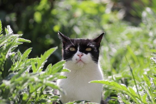 Gatto domestico bianco e nero che riposa nell'erba verde in una giornata di sole