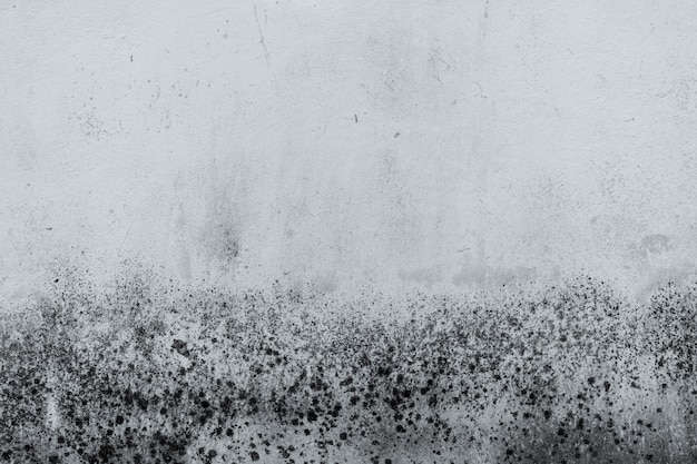 Vecchio muro di cemento bianco e nero