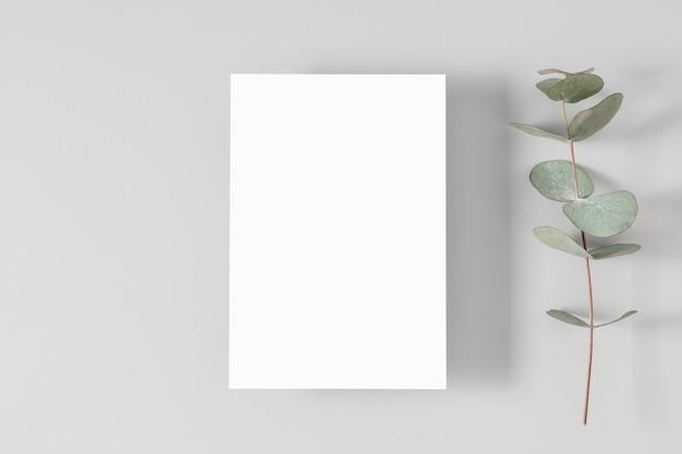 Scheda vuota o nota con foglie di eucalipto su sfondo bianco