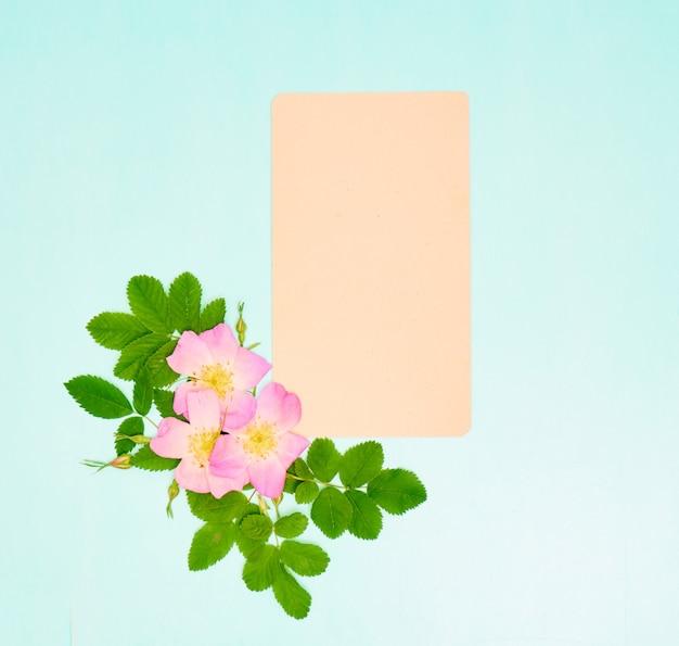Carta bianca per il testo con fiori di rosa selvatica su sfondo blu.