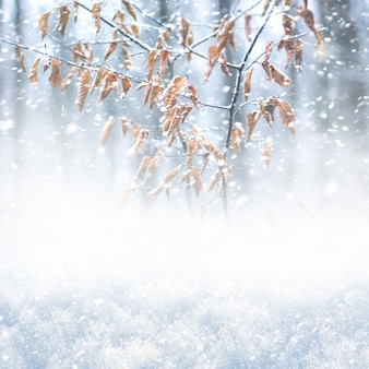 Bufera di neve nella foresta, sfondo quadrato invernale