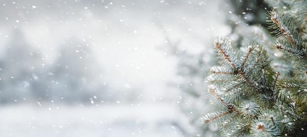 Bufera di neve nella foresta di abeti, natale e capodanno sullo sfondo