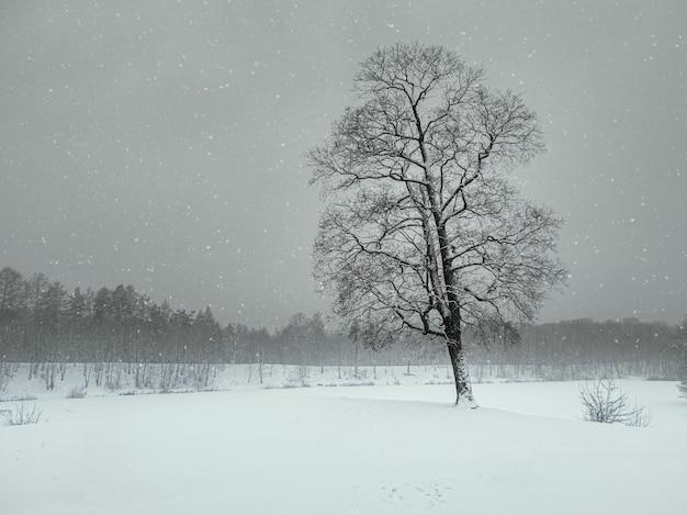 Blizzard nel parco invernale. albero sotto il manto nevoso. paesaggio invernale minimalista.