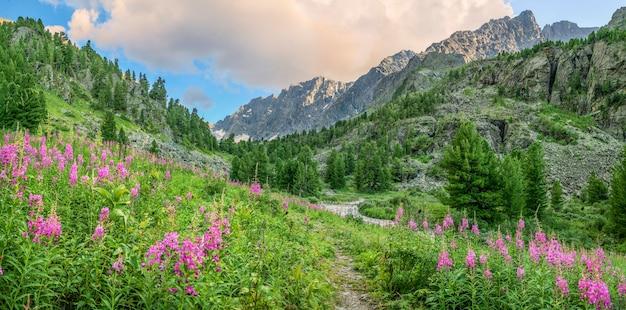 Prati alpini in fiore nella luce della sera