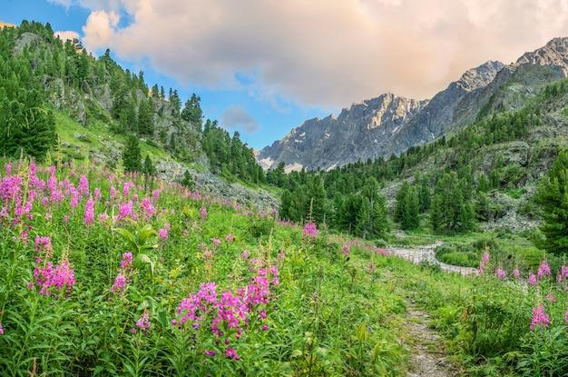 Prati alpini in fiore nella luce della sera Foto Premium