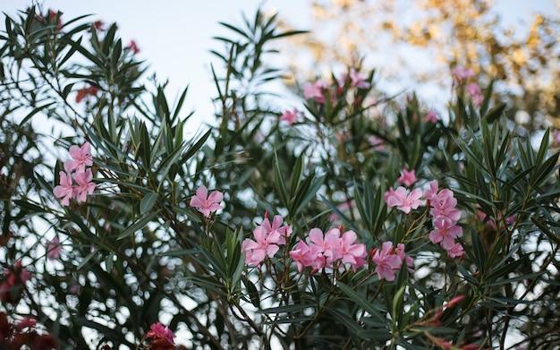 Fiori rosa carini in fiore in giardino.