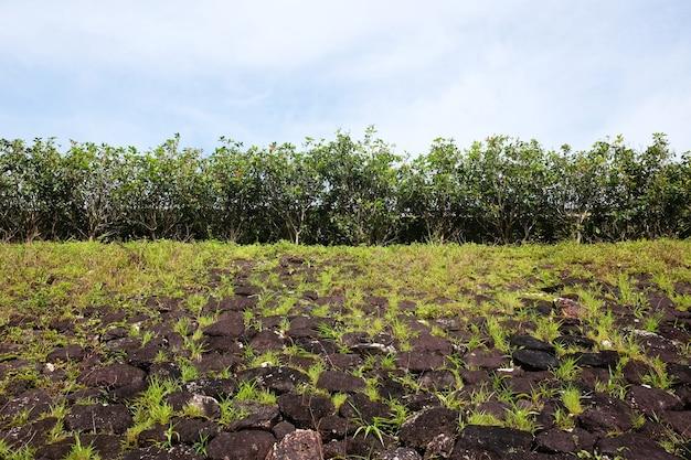 Muschio ed erba verdi di fioritura sulla parete di pietra di lerciume e sulle piante che crescono sulla collina rocciosa per struttura e fondo
