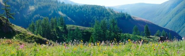 Prato fiorito su uno sfondo di montagne, vista panoramica, viaggi estivi