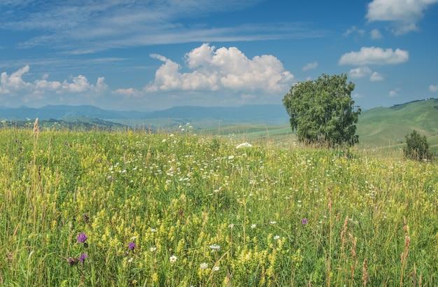 Prati di montagna in fiore, colline e cielo blu con nuvole