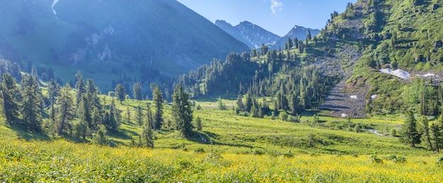 Fioritura valle di montagna la mattina di primavera
