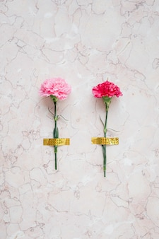 Fiore di garofano rosa in fiore registrato su uno sfondo di marmo
