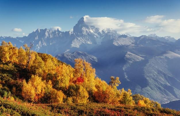 Fiori di rododendro in fiore nelle montagne del caucaso. svane superiore