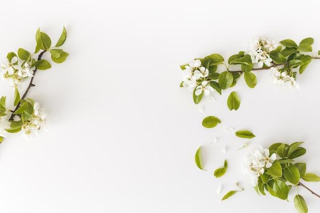 Rami fioriti di pera primaverile su un muro bianco, cornice floreale, vista dall'alto, layout piatto. concetto di primavera