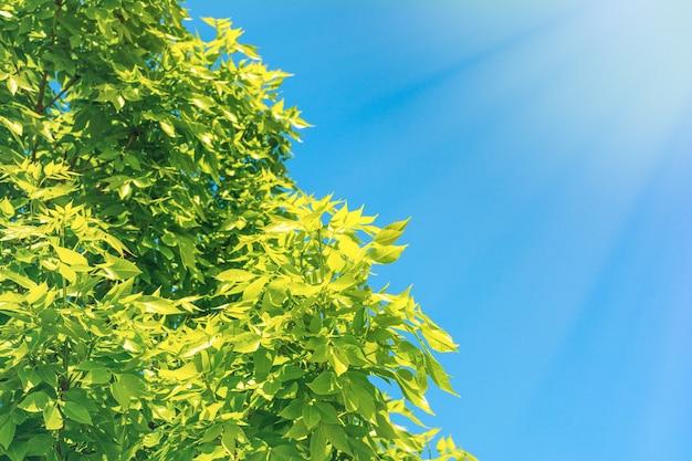 Albero in fiore sullo sfondo del cielo blu