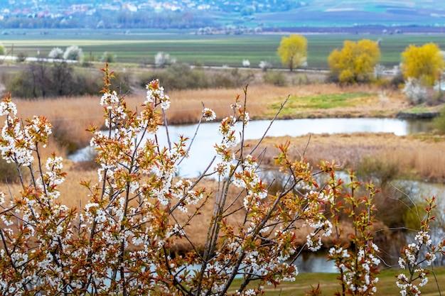 Ramo di un albero in fiore sulle rive di un fiume tortuoso