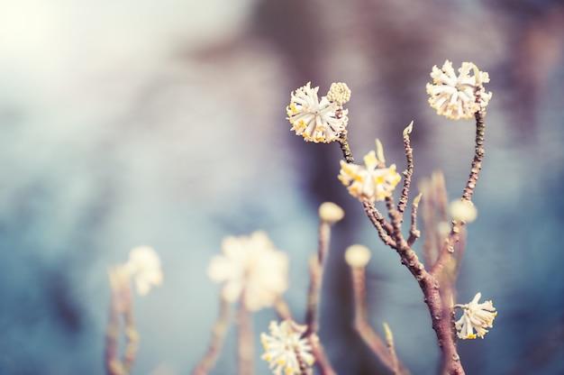 Piante selvatiche in fiore. messa a fuoco selettiva, filtro vintage. sfondo della natura primaverile