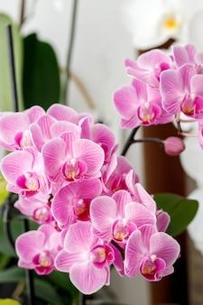 Fiore di orchidee rosa sul davanzale della finestra