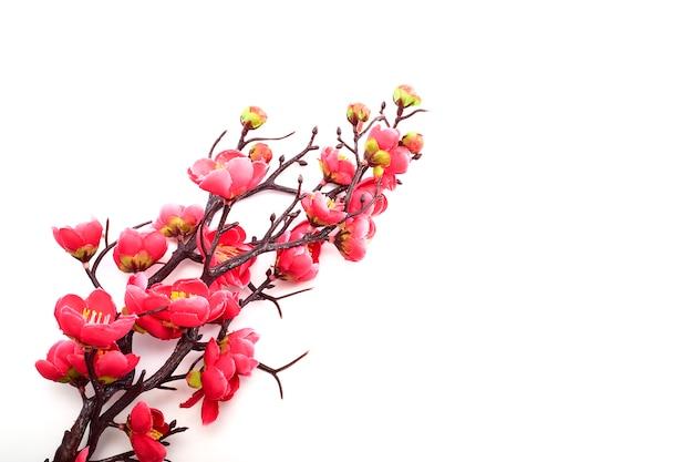 Ciliegio in fiore con rosa brillante