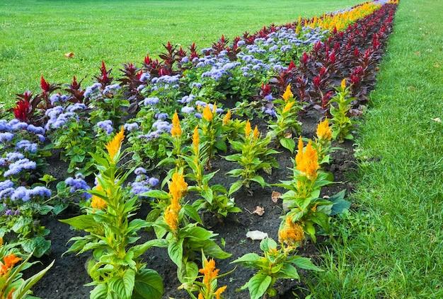 Fioritura aiuola colorata nel parco cittadino di estate