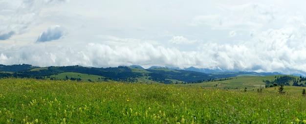 Fioritura radura contro la catena montuosa. paesaggio estivo nelle montagne dei carpazi.