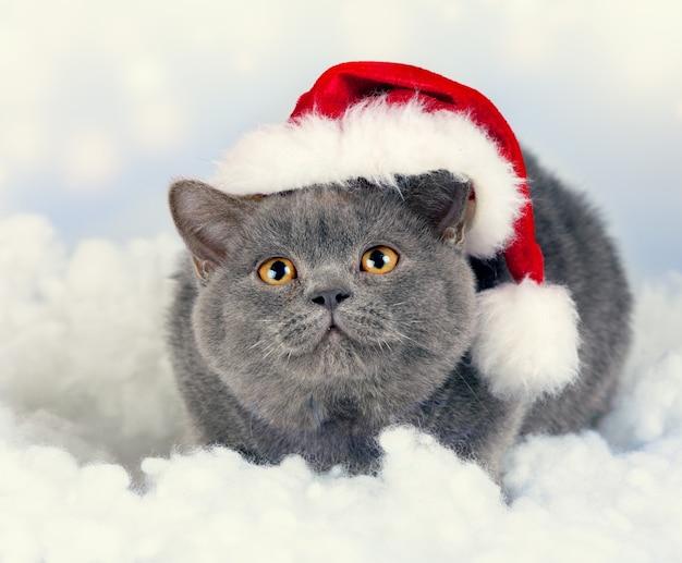 Gattino britannico blu che indossa il cappello di babbo natale
