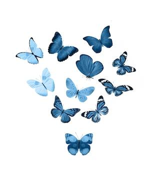 Farfalle blu isolate su priorità bassa bianca. falene tropicali. insetti per il design. colori ad acquerello