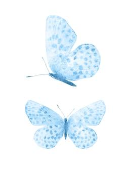 Farfalle blu isolati su sfondo bianco. falene tropicali