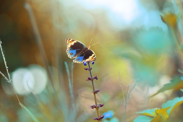 Farfalla blu sui fiori con lo sfondo della natura