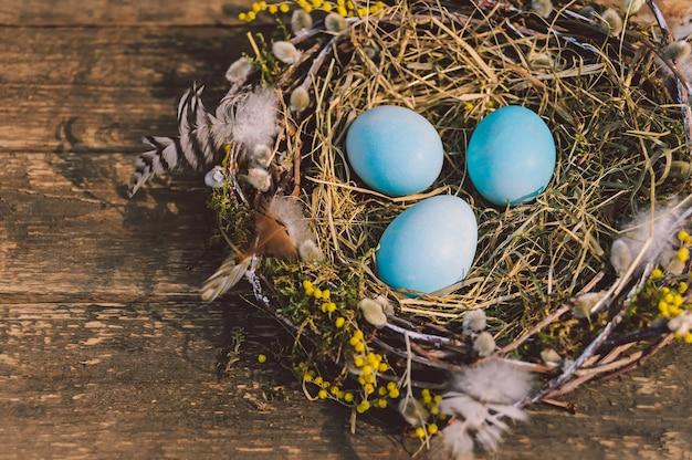 Uova sfacciate blu in un nido con piume. sullo sfondo del tabellone.
