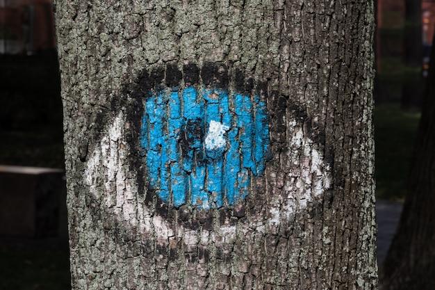Gli occhi azzurri dipinti sull'albero della foresta guardano le persone