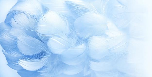 Soffici piume di uccello blu piume di uccello blu in morbido stile sfocato bella nebbia