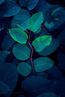 Foglie di piante blu nel giardino