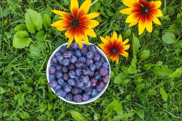 Prugne blu in giardino in una tazza su erba verde