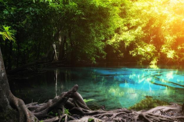 Lo stagno blu ad emerald pool è lo stagno non visto nella foresta della mangrovia a krabi in tailandia.