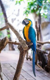 Pappagallo blu-giallo dell'ara nello zoo