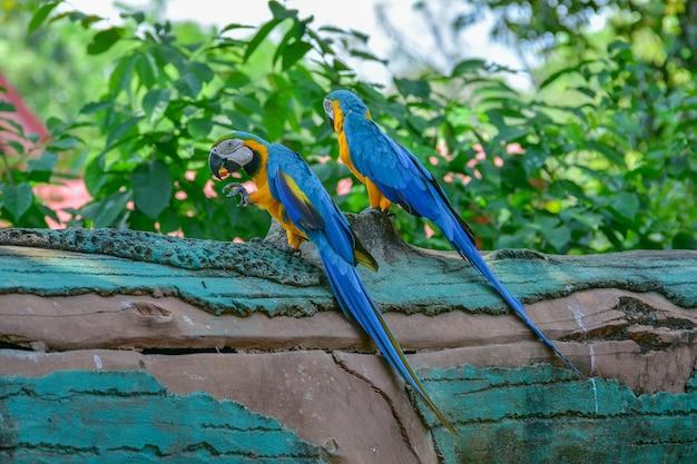Un pappagallo blu e giallo