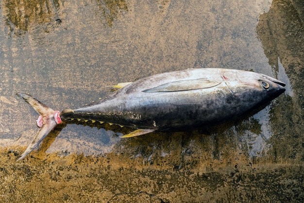 Il tonno rosso si trova su una superficie di cemento