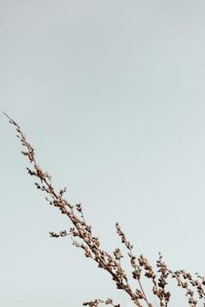Bluegrass al cielo blu. natura minimale