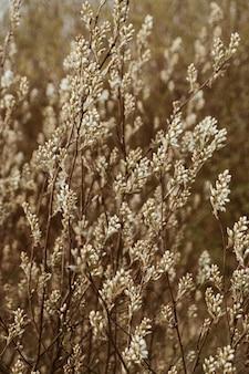 Campo steli bluegrass. minimo paesaggio naturale