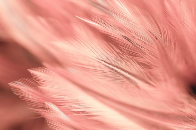 Stili di sfocatura e colore morbido della trama di piume di polli per lo sfondo, arte astratta