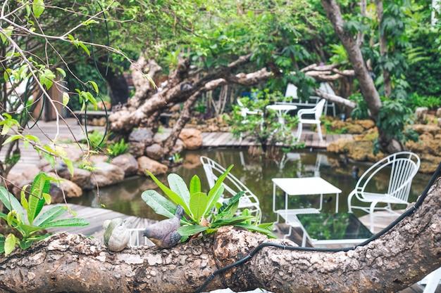 Tavola e sedie della sfuocatura bianche in un caffè del giardino.