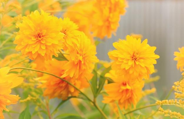 Sfondo floreale autunnale sfocato prato
