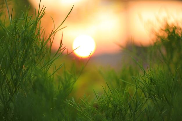 Sfondo sfocato di alberi, erba e sole.