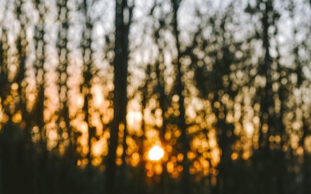 Bokeh sfocato della siluetta dell'albero con la luce del tramonto della foresta.