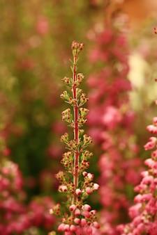 Sfondo botanico floreale sfocato in fiori rosa