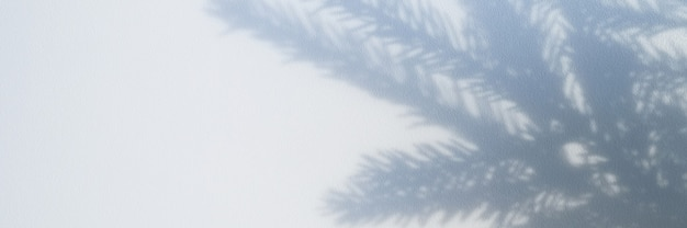 Foto sfocata di un'ombra da un ramo di un albero di natale su uno sfondo grigio bianco di una parete o di un tavolo. banner