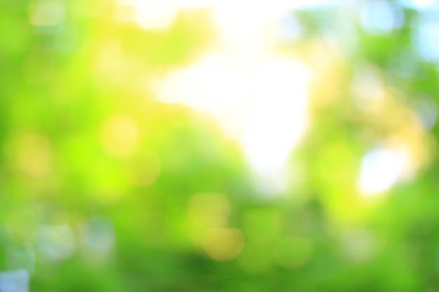 Immagine sfocata di fogliame verde fresco nella foresta